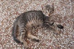 Gattino adorabile del soriano che si trova sul pavimento Fotografia Stock