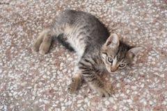 Gattino adorabile del soriano che si trova sul pavimento Fotografia Stock Libera da Diritti