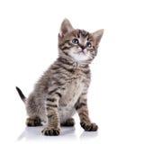 Gattino adorabile a strisce fotografia stock