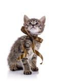 Gattino adorabile a strisce con un arco Immagine Stock Libera da Diritti