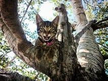 Gattino in albero Fotografia Stock Libera da Diritti