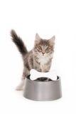 Gattino alla ciotola di un cane fotografia stock libera da diritti