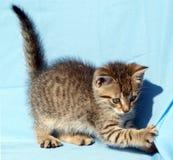 gattino allegro fotografia stock
