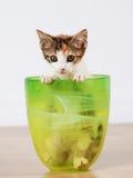 Gattino allegro fotografie stock