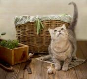Gattino allegro sveglio su un pavimento di legno vicino al canestro con un raccolto nel paese fotografia stock libera da diritti