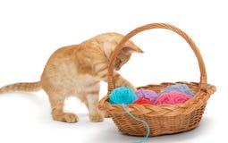 Gattino arancio del soriano Immagine Stock