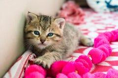 Gattino barrato sulla coperta, gattino sveglio della tigre da 3 settimane un piccolo con gli occhi azzurri fotografia stock libera da diritti