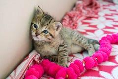 Gattino barrato sulla coperta, gattino sveglio della tigre da 3 settimane un piccolo con gli occhi azzurri fotografie stock libere da diritti