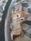 Gattino bello fotografie stock