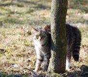 Gattino bello Fotografia Stock Libera da Diritti