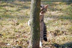 Gattino bello Immagini Stock Libere da Diritti