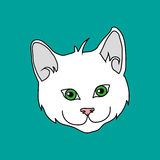 Gattino bianco Fotografie Stock