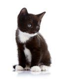 Gattino in bianco e nero Immagini Stock
