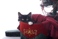 Gattino in bianco e nero di Natale in un contenitore di velluto Fotografia Stock