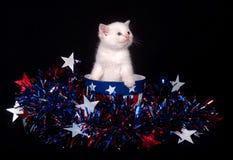 Gattino bianco e quarto di luglio Immagini Stock Libere da Diritti