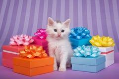 Gattino bianco nei presente variopinti, fondo porpora Fotografie Stock