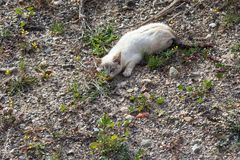 Gattino bianco selvaggio fotografie stock