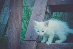 Gattino bianco sulle scale di legno retro Fotografia Stock Libera da Diritti