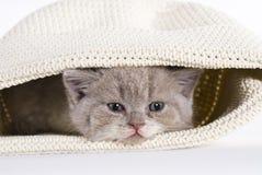 Gattino britannico dello shorthair, 6 settimane, stanche Fotografie Stock Libere da Diritti