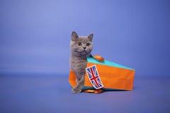 Gattino britannico di Shorthair Fotografia Stock