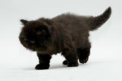 Gattino britannico nero sveglio piacevole Fotografie Stock Libere da Diritti