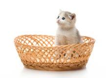 Gattino in cestino di vimini Fotografie Stock