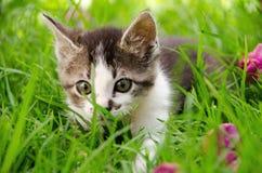 Gattino che cammina nell'erba verde alta Fotografia Stock