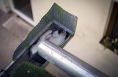 Gattino che dorme nella gronda Immagine Stock Libera da Diritti