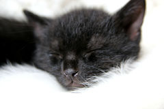 Gattino che dorme sulla coperta bianca Fotografie Stock Libere da Diritti