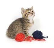 Gattino che gioca con il filato Fotografie Stock Libere da Diritti