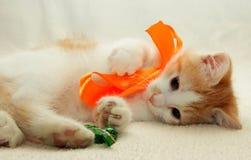Gattino che gioca con l'arco che si trova con la caramella Immagine Stock