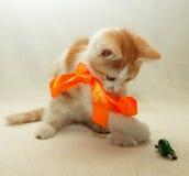 Gattino che gioca con un arco con la caramella Fotografia Stock Libera da Diritti