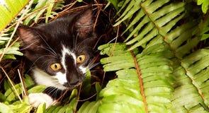 Gattino che gioca fra le felci fotografia stock libera da diritti