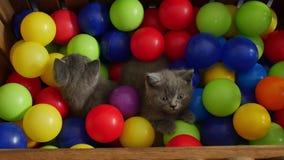 Gattino che gioca fra le palle stock footage