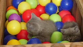 Gattino che gioca fra le palle archivi video