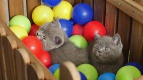 Gattino che gioca fra le palle video d archivio