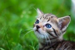 Gattino che osserva in su davanti all'erba Fotografie Stock