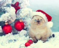 Gattino che porta il cappello di Santa Fotografia Stock
