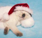 Gattino che porta il cappello di Santa Immagini Stock