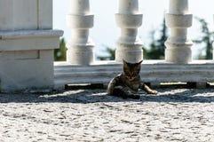 Gattino che riposa all'ombra di un recinto fotografia stock