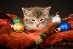 Gattino che riposa su una coperta rossa fotografie stock libere da diritti