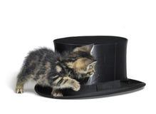 Gattino che si nasconde dietro un cappello superiore Immagini Stock