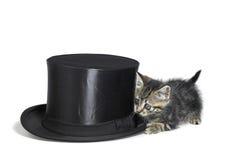 Gattino che si nasconde dietro un cilindro Fotografie Stock