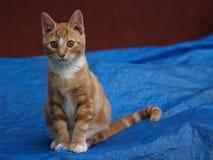 Gattino che si siede abbastanza Fotografie Stock