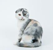 Gattino che si siede su un bianco Fotografie Stock Libere da Diritti