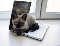 Gattino che si siede su un computer portatile, contro la finestra Fotografia Stock