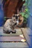 Gattino che si siede sui bordi di legno Fotografie Stock