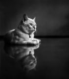 Gattino che si trova sul pavimento pulito immagine stock
