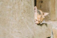 Gattino che si trova sul portico Fotografia Stock Libera da Diritti
