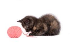 Gattino chiazzato, sfera di filato Fotografia Stock Libera da Diritti